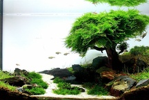 Aquascaping / by Chantelle Thompson