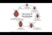 bed bug removal / Be willing to lose a little sleep over Bed Bug Removal and catch these bitters during their peak feeding time, which is right before dawn. Hop over to this website http://www.bullseyek9.com/ for more information on Bed Bug Removal