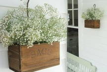 rustic water cans and troughs / by Jenny Mitchell