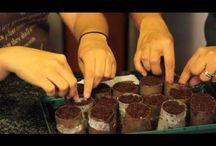 Ogród / Gardening