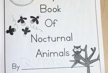 Kinder-nocturnal animals