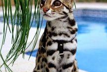 CattyCat
