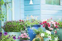 Çiçekler ve aranjmanlar
