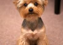 Rusty Haircuts
