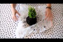 kokedamy a bonsaje