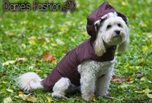 Fashionable dogs