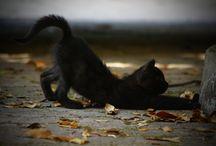 Autumn. Black