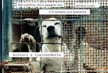Adottami / Campagna Adozioni promossa dalla Lega Protezione Animali di Brindisi. Ph: Claudia Canepa