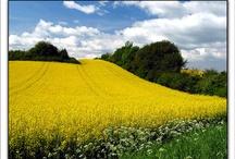 Yellowish / Everything yellow