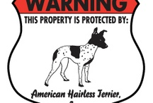 American Hairless Terrier Signs and Pictures / Warning and Caution American Hairless Terrier Dog Signs. https://signswithanattitude.com/american-hairless-terrier-signs.html