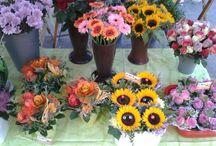 Wochenmarkt 11.09.2015 / Jetzt ist wieder Edigheimer Wochenmarkt!  Wir bieten Ihnen heute wieder frische Schnitt- und Topfpflanzen von regionalen Gartenbaufachbetrieben.  Verwöhnen Sie sich oder einen Ihrer Lieben mit einem schönen Frischblumenstrauß.  Sie wissen ja: Blumen schenken heißt Freude schenken!