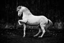 Beautiful photos of horses / by Angela Dinan