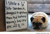 Pugs / by Jacko The Dog