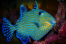 Deep Blue Divers / Explore the pristine underwater world of Laamu Atoll on a dive with Deep Blue Divers.