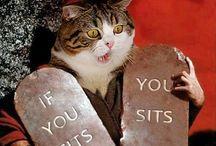 CAT TRASH