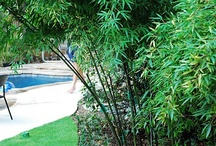 My pool area...
