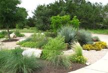 Garden :: Outdoor Areas