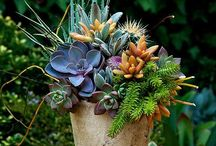 to Arrange: the Succulent edition / succulent container garden design