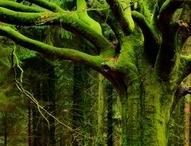 Wildergreen