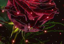 Розы красные / Природа, цветы, розы, красивые фото, картинки, анимация, обои, видео, интересные факты