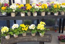 New Arrivals / Come see the year-round New Arrivals in the Seasons Garden Center