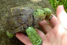 Tortoise project