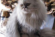 merveilleux compagnon.... le chat