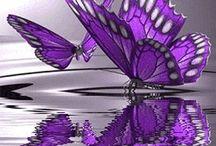 Motyle <3