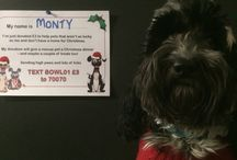 #SantaPaws 2015 / Generous pets donate pet dinners to rescue animals this December