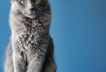 Cats&Kitties