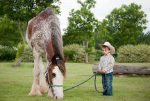 Iso hevonen+pieni ihminen