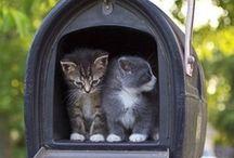 Cats*-*<3