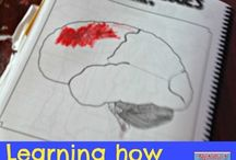 Brain and learning