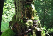 Where fairies live