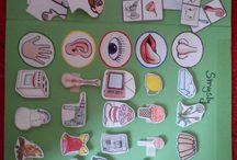 Testünk projekt