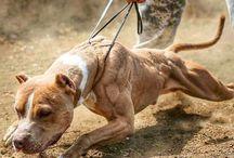 devastated dogs