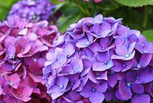 Baa's flowers