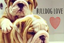 Bullies!!! / Best dog breed ever!