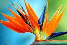 Flores del paraiso
