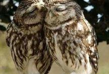 questo è amore