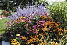 Gardening / Landscaping / by Judy Froehlich