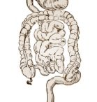 Digestive System - Health Conditions / This integral part of the human body includes the digestive tract and the organs which serve as accessories to it.  The digestive system processes food into molecules which can be absorbed by the body and utilized by the cells.  When a person eats, the food consumed is broken down bit by bit until the various molecules are finally tiny enough to be absorbed by the body and the resulting waste products are eliminated.