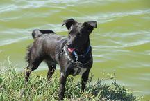 The Adventures of Savannah: A Small, Black Terrier / A series of children's books about a curious & friendly terrier named Savannah.