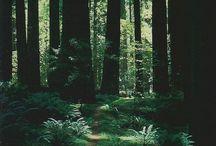 Волшебный Лес