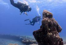 Scuba Diving Pics May 2014 / by PADI