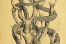 Snakeks