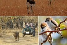 Gujarat Tours / Gujarat Tours - Custom made Private Guided Luxury Tours in India - Heart and Soul Holidays in India - http://toursfromdelhi.com/