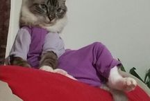 cats / Lounge cat lol