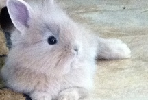 Cute bunny,owls and puppy / Cute animals