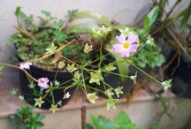 Flora / Plantas e flores